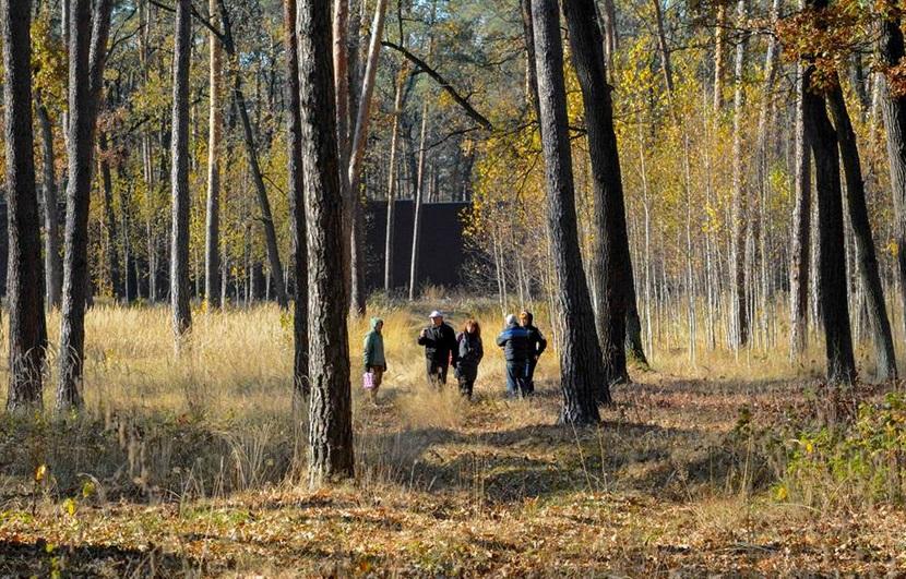 ліс за парканом