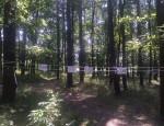 лісок